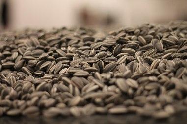 800px-Sunflower_Seeds_by_Ai_Weiwei